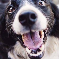 happy dog vets